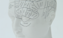 Model of the human head mapped